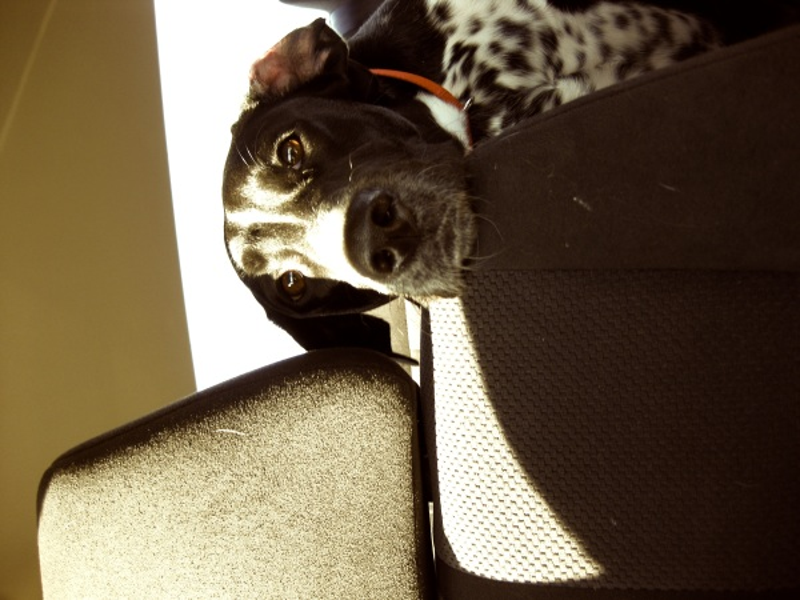 puppyperch2